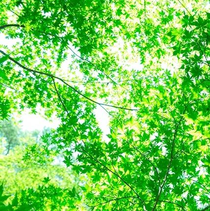 もみじの緑葉_400x400